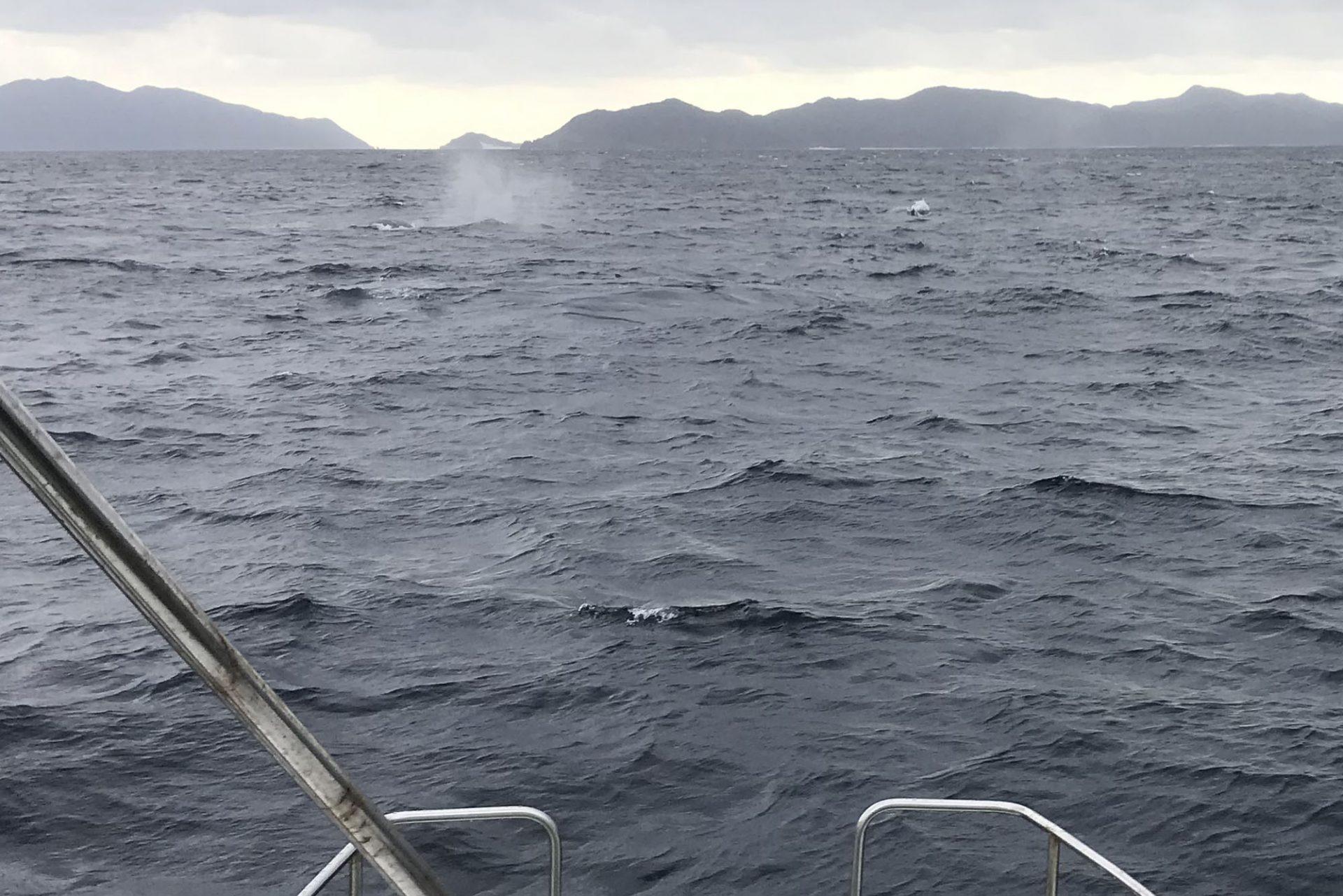 ブロー(クジラが背中の穴から勢いよく水を噴き上げること)