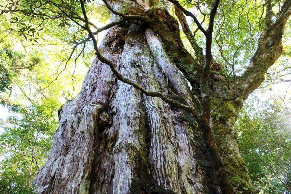 鹿児島県の離島、世界自然遺産の「屋久島」を1日でサクッと楽しむ「いいとこ取りの旅」 イメージ