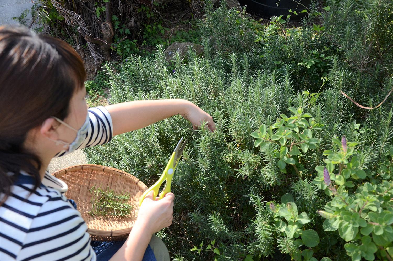 与論島に自生している薬草3つを紹介