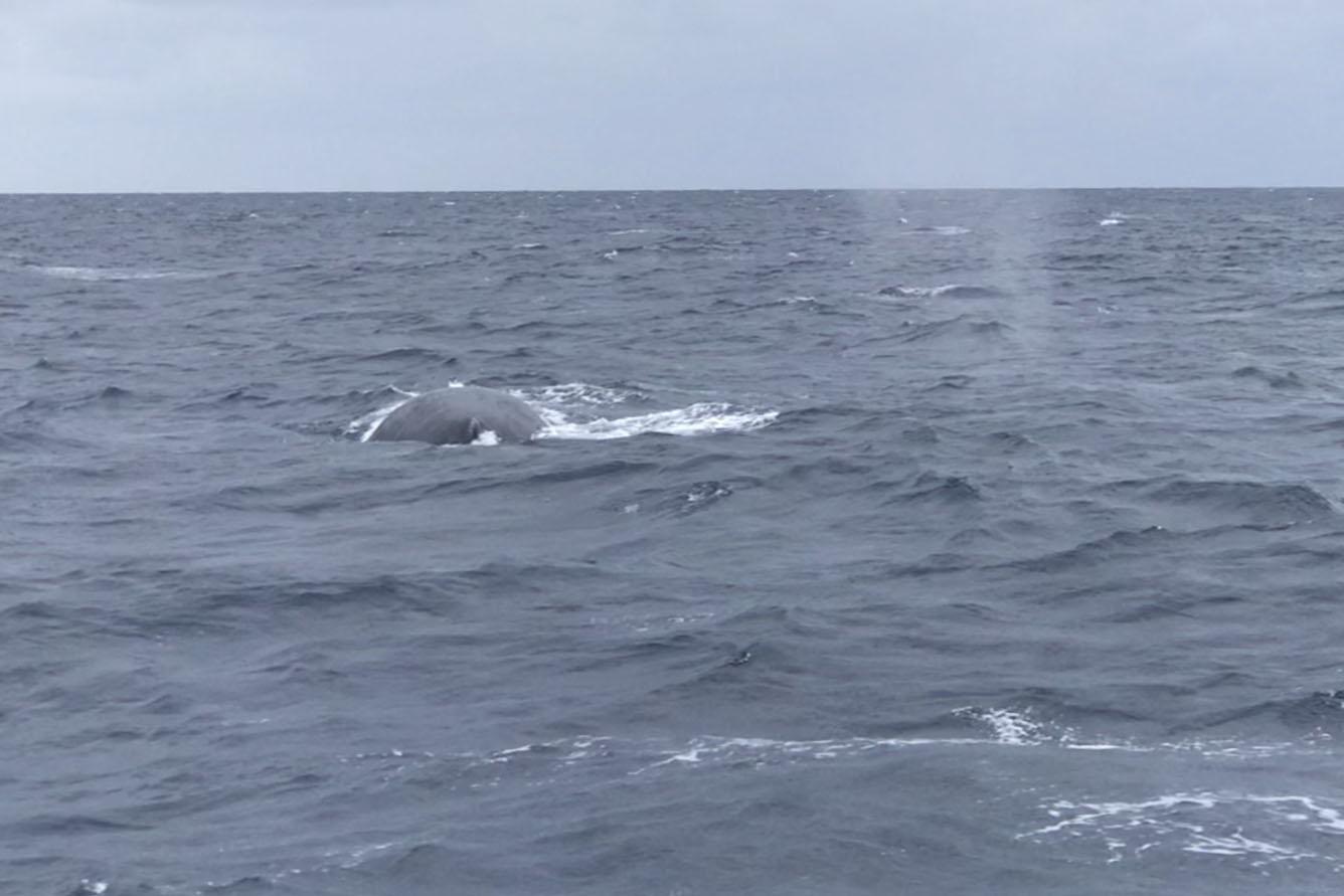 船のすぐ横にクジラ