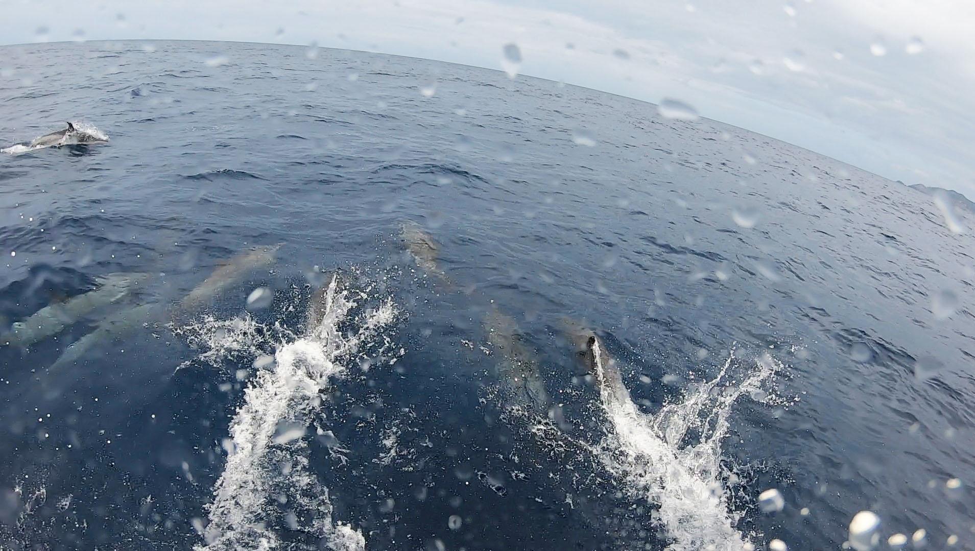 イルカの大群がお出迎え