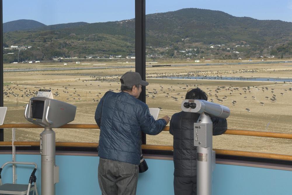 出水市ツル観察センター 鹿児島 観光 冬 九州 旅行 12月 1月 2月 おすすめ