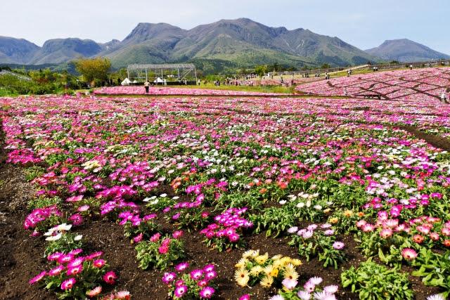 くじゅう花公園 九州 黒川 温泉 近く 大分県 旅行 観光 おすすめ