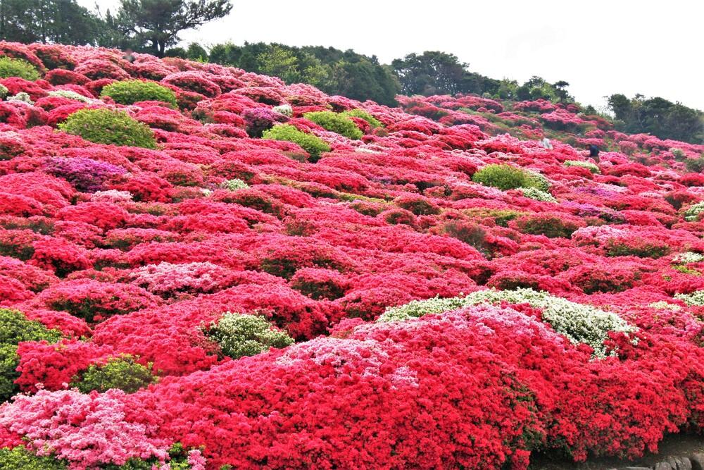 長串山公園 つつじ 長崎 佐世保 観光 地 スポット 旅行 おすすめ