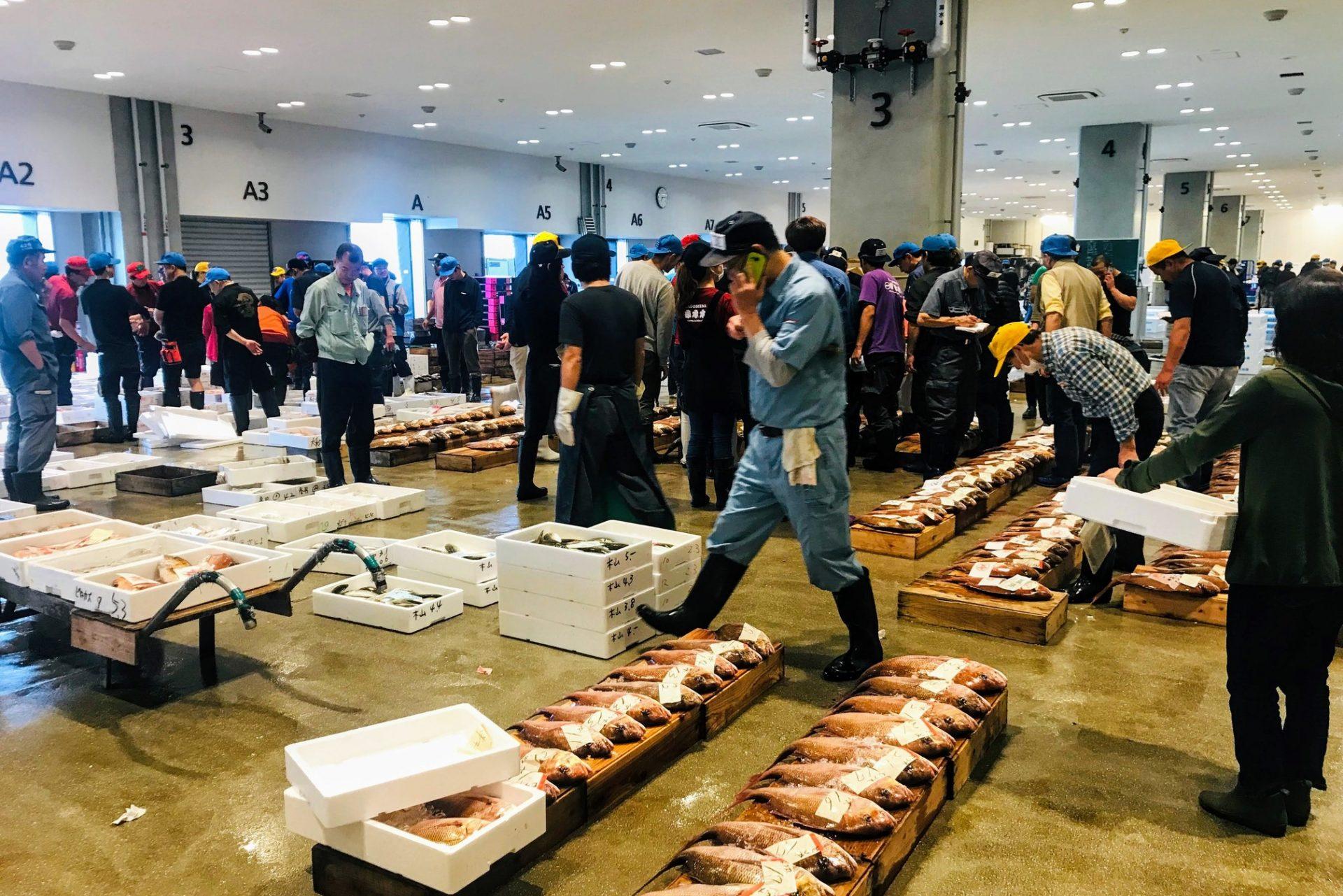鹿児島魚類市場 見学ツアー