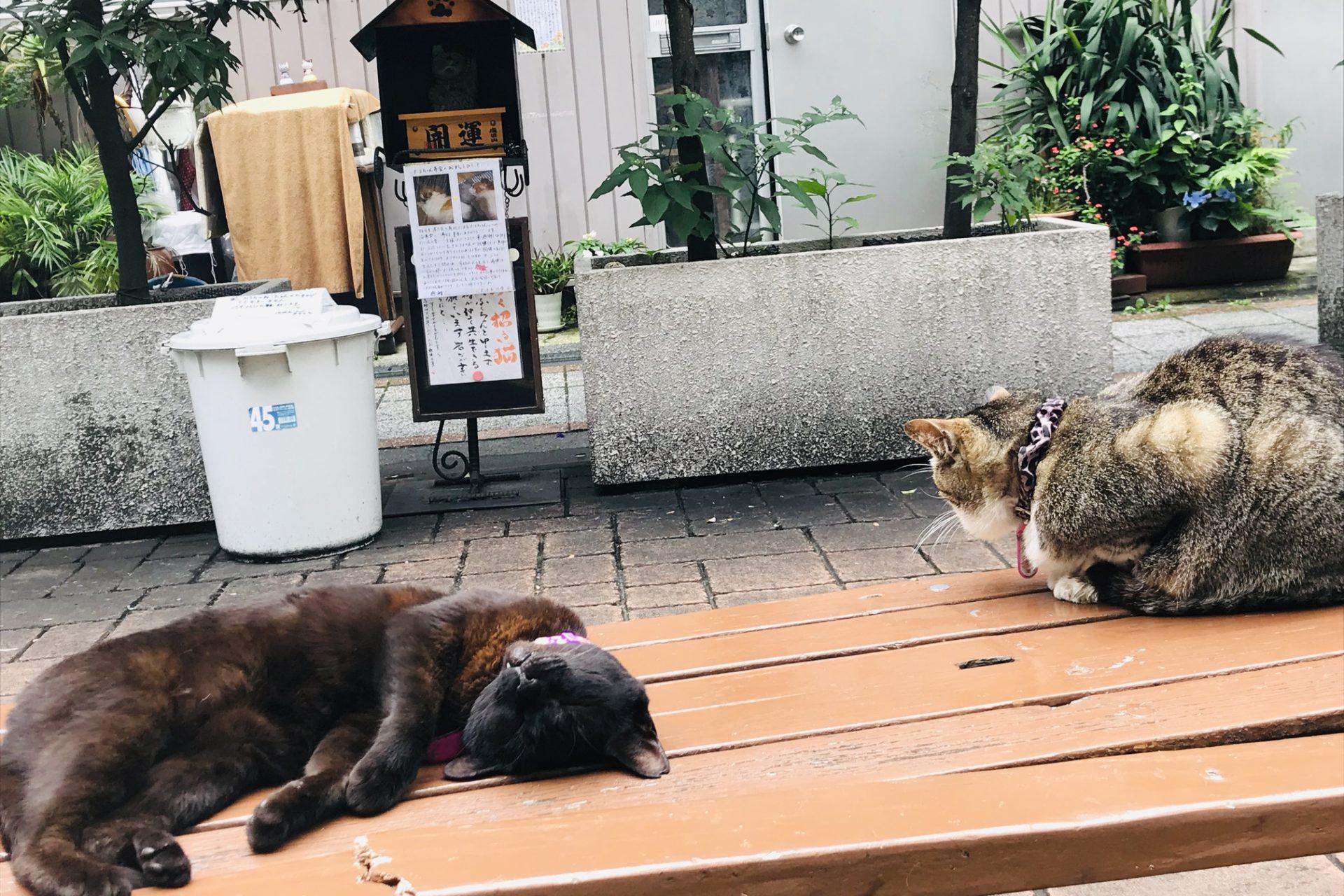 四季通り 猫の足跡通り