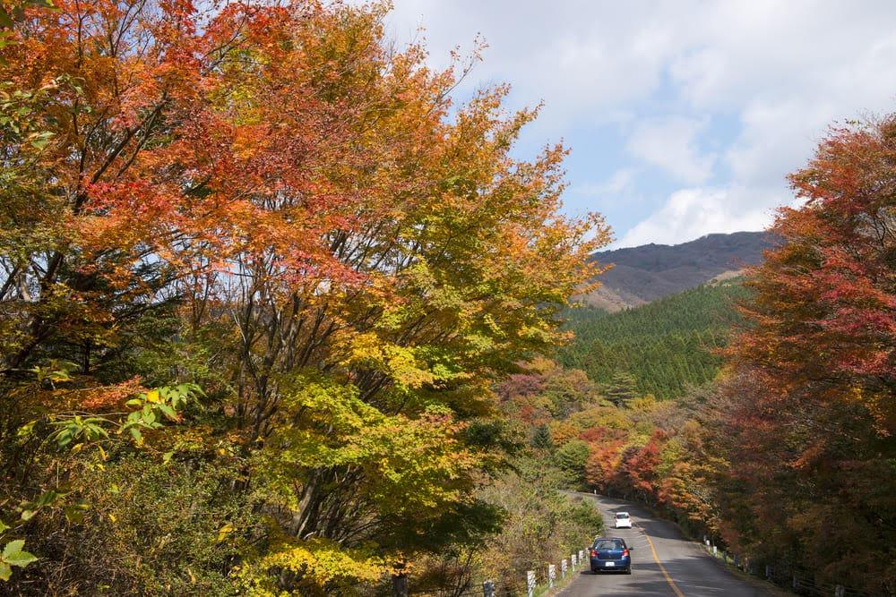 阿蘇くじゅう国立公園 竹田市 大分県 観光 名所 人気 おすすめ 九州 旅行