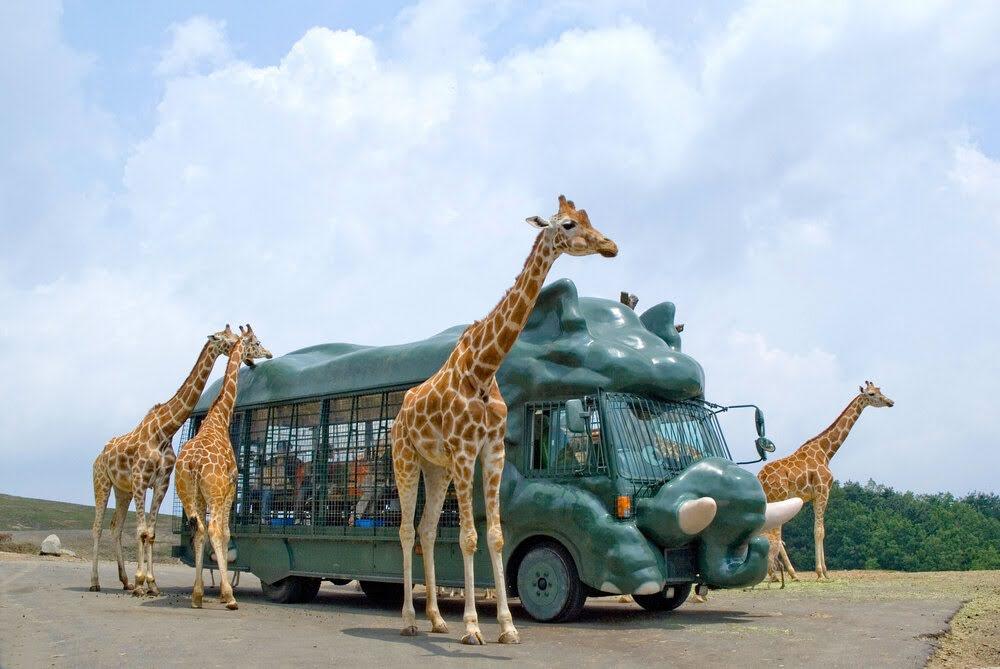 九州自然動物公園アフリカンサファリ 宇佐市 大分県 観光 名所 人気 おすすめ 九州 旅行