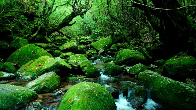 白谷雲水峡 屋久島 鹿児島 絶景 景色 自然 九州 旅行 観光 おすすめ