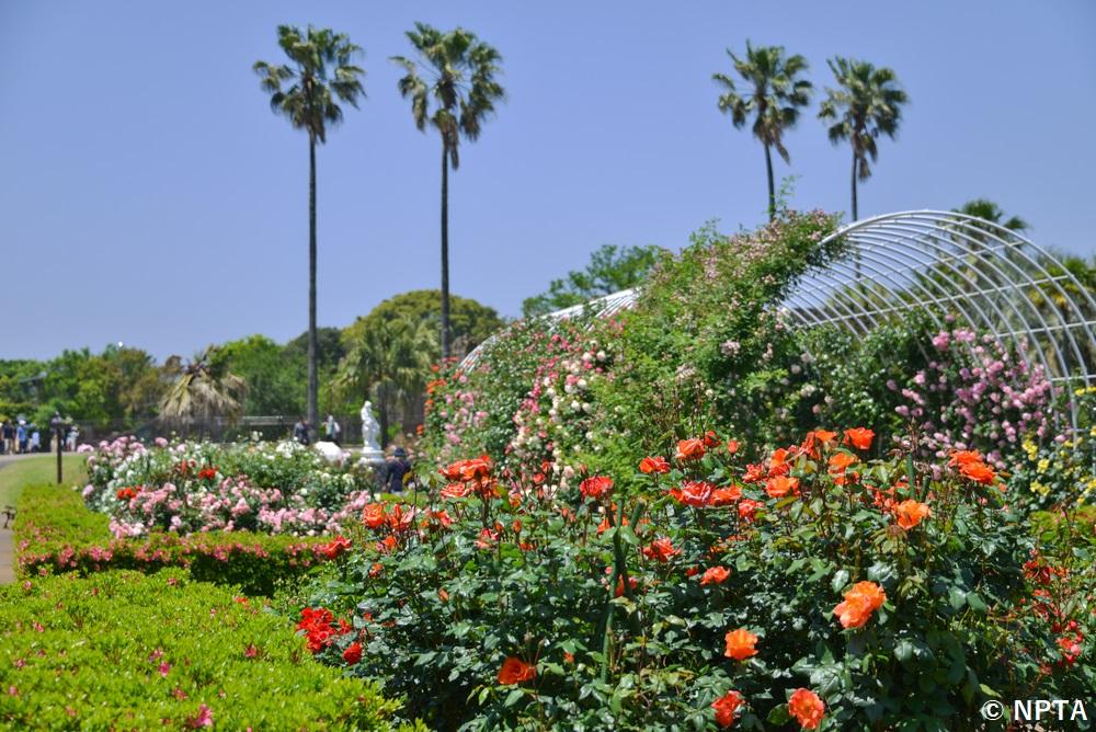 九十九島動植物園森きらら 長崎 佐世保 観光 地 スポット 旅行 おすすめ