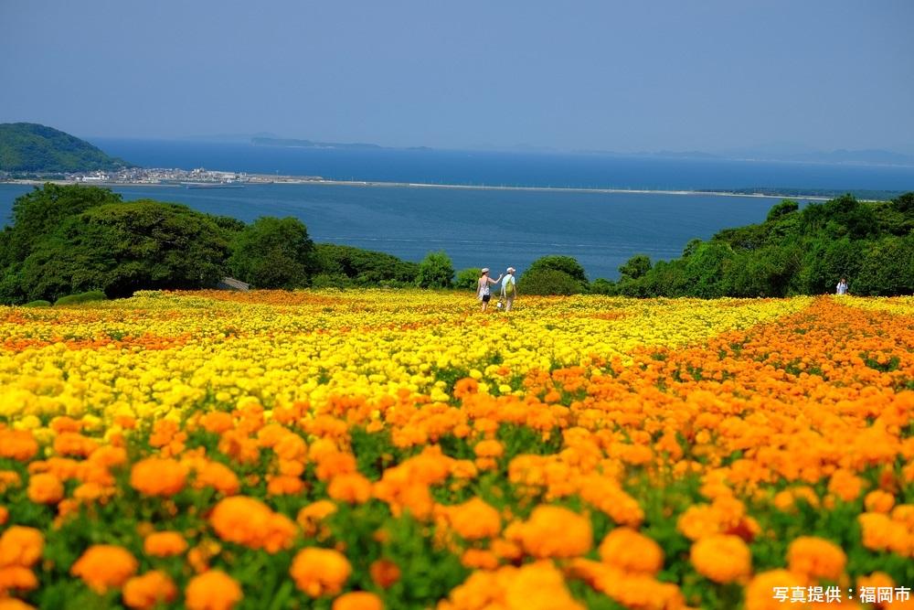 のこのしまアイランドパーク 福岡市 福岡 観光 名所 人気 スポット 九州 旅行 観光 おすすめ