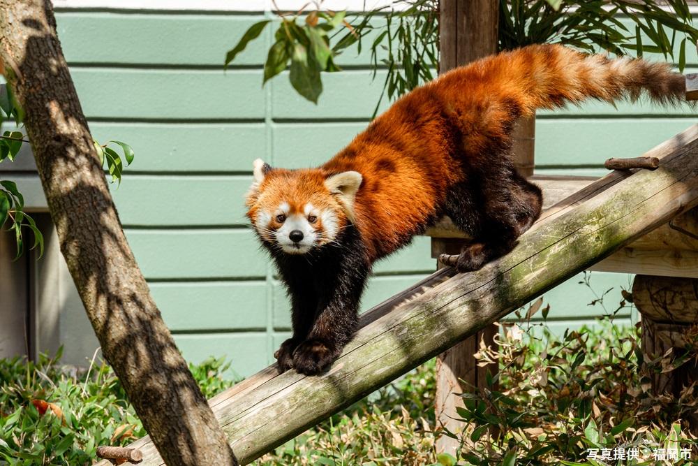 福岡市動植物園 福岡 観光 名所 人気 スポット 九州 旅行 観光 おすすめ