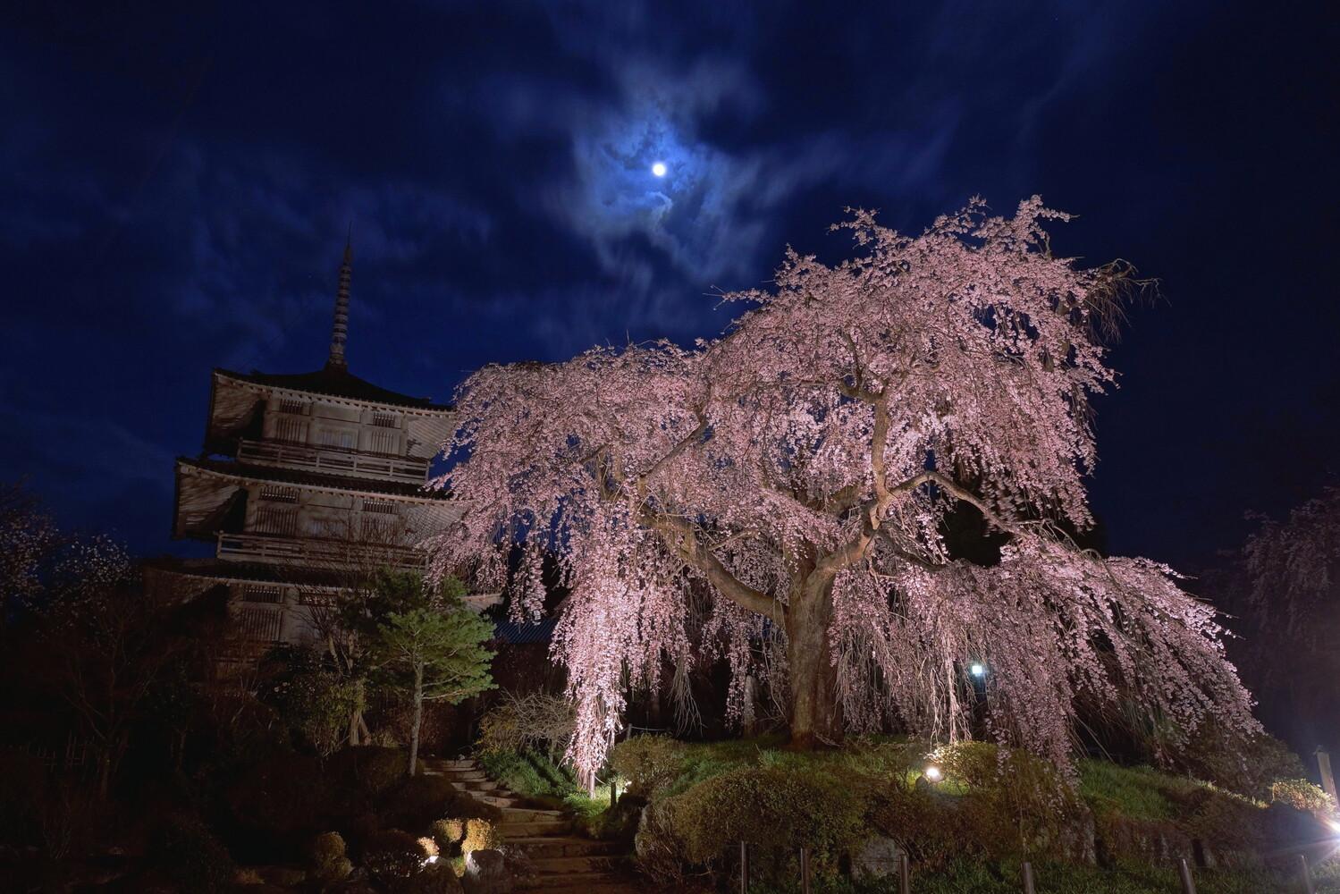 浄専寺 しだれ桜 五ヶ瀬町 宮崎 絶景 スポット 九州 旅行 観光 自然 おすすめ
