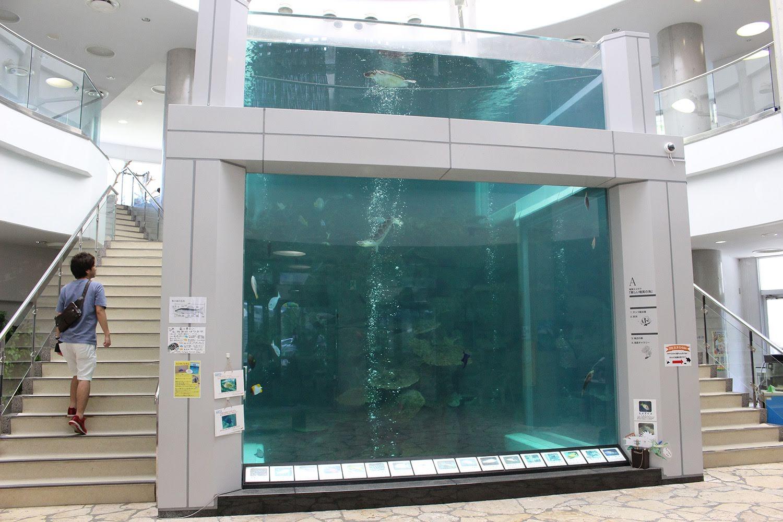 大水槽 奄美海洋展示館 大浜海浜公園 ウミガメ