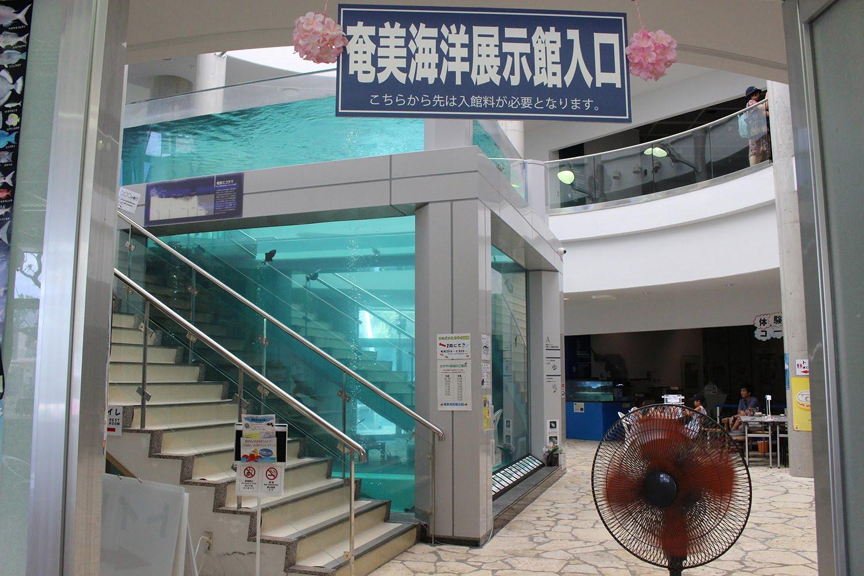 入口 水槽 奄美海洋展示館 大浜海浜公園 ウミガメ