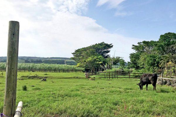 島全体が農園のような「喜界島」で、ここにしかないものを見に行こう! イメージ