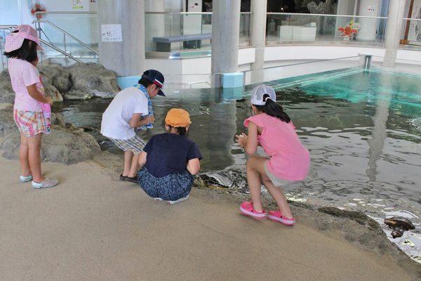 ウミガメ エサやり 奄美海洋展示館 大浜海浜公園 ウミガメ