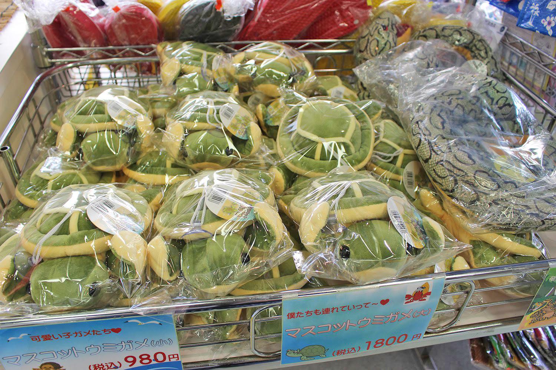 お土産 マスコット ウミガメ 奄美海洋展示館 大浜海浜公園 ウミガメ
