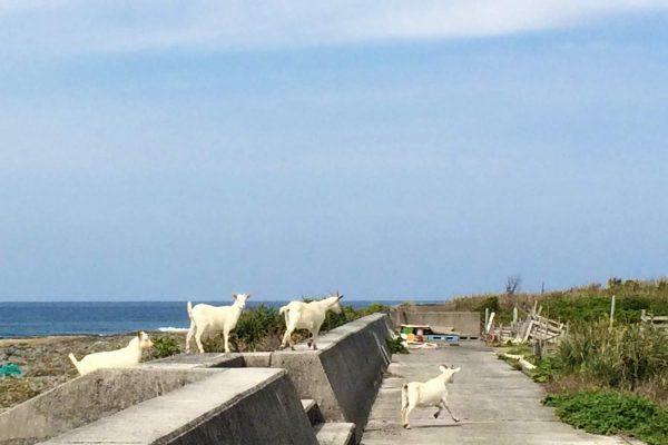 ヤギ 山羊 料理 奄美 喜界島