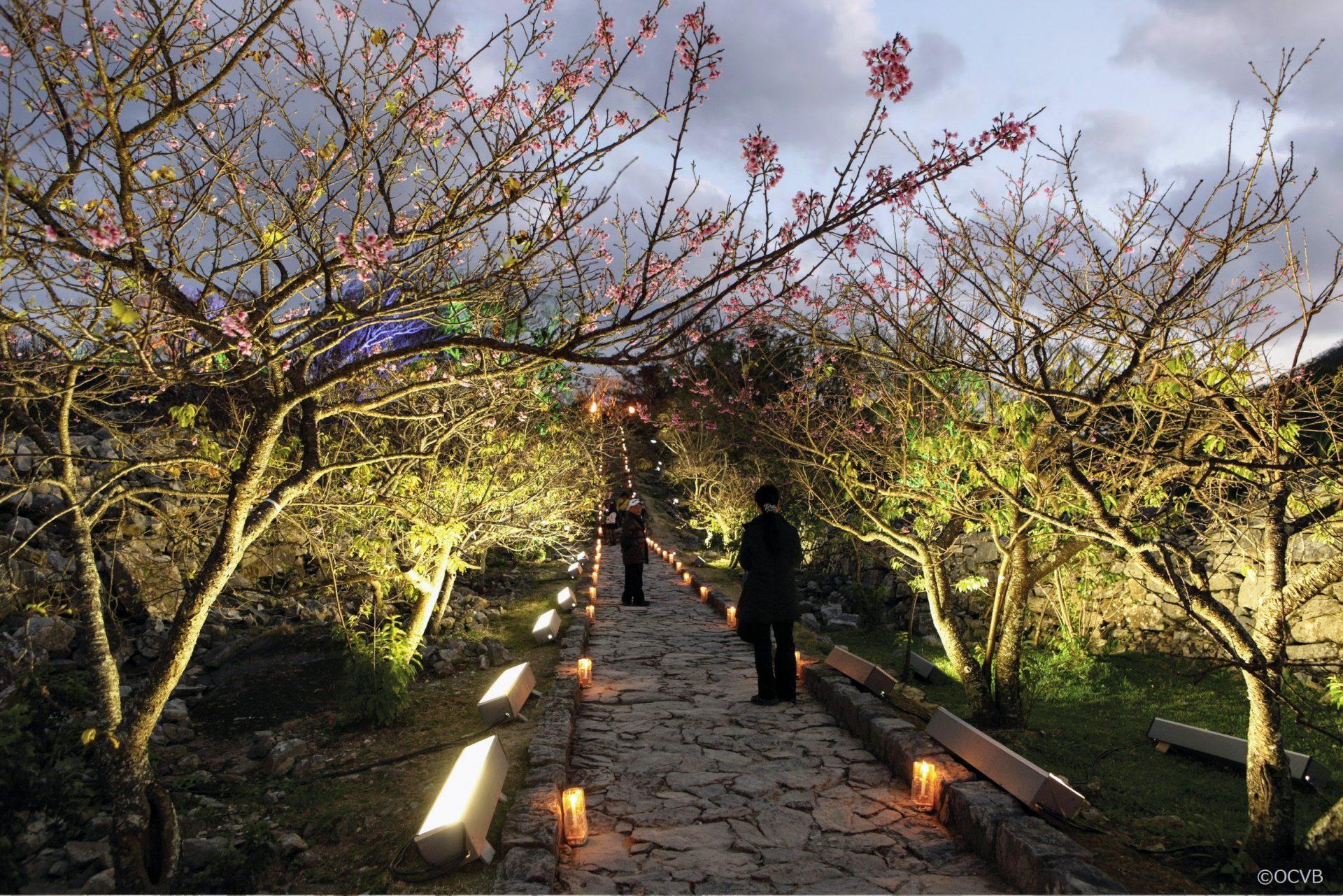 沖縄の桜祭り「今帰仁グスク桜まつり」