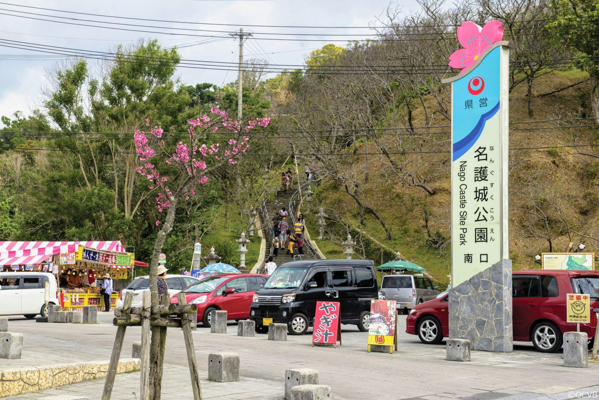 沖縄の桜祭り「名護さくら祭り」