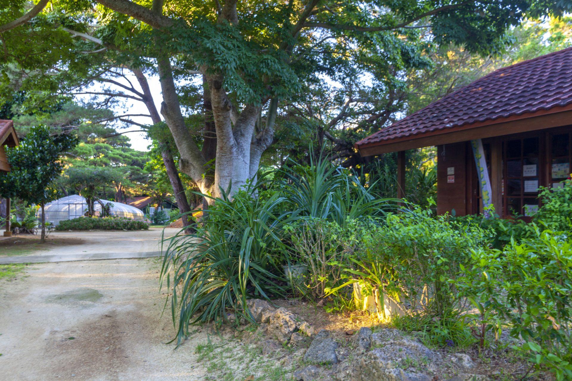 宮古島市熱帯植物園の楽しみ方①ウォーキング