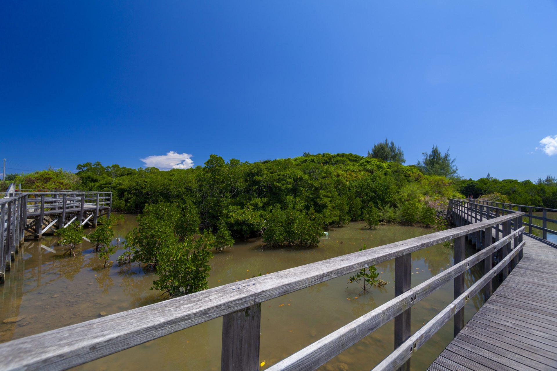島尻のマングローブ林 宮古島 観光 スポット おすすめ 沖縄 旅行
