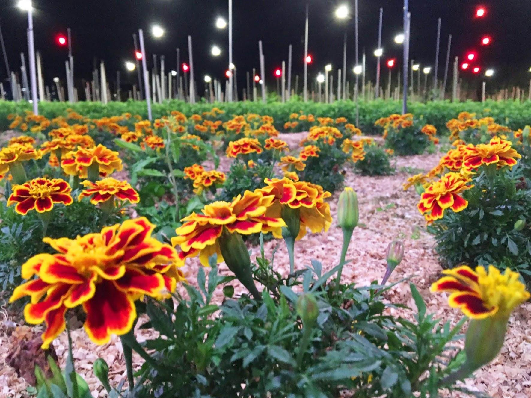 Sunset Farm Okinawa