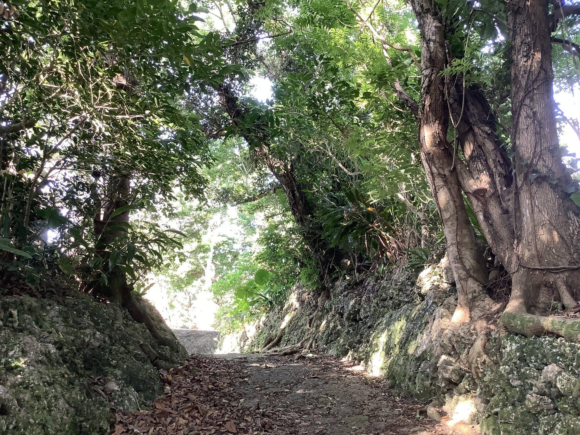 ヒジ川坂 安里川(金城川・かなぐしくがー)へ繋がる道