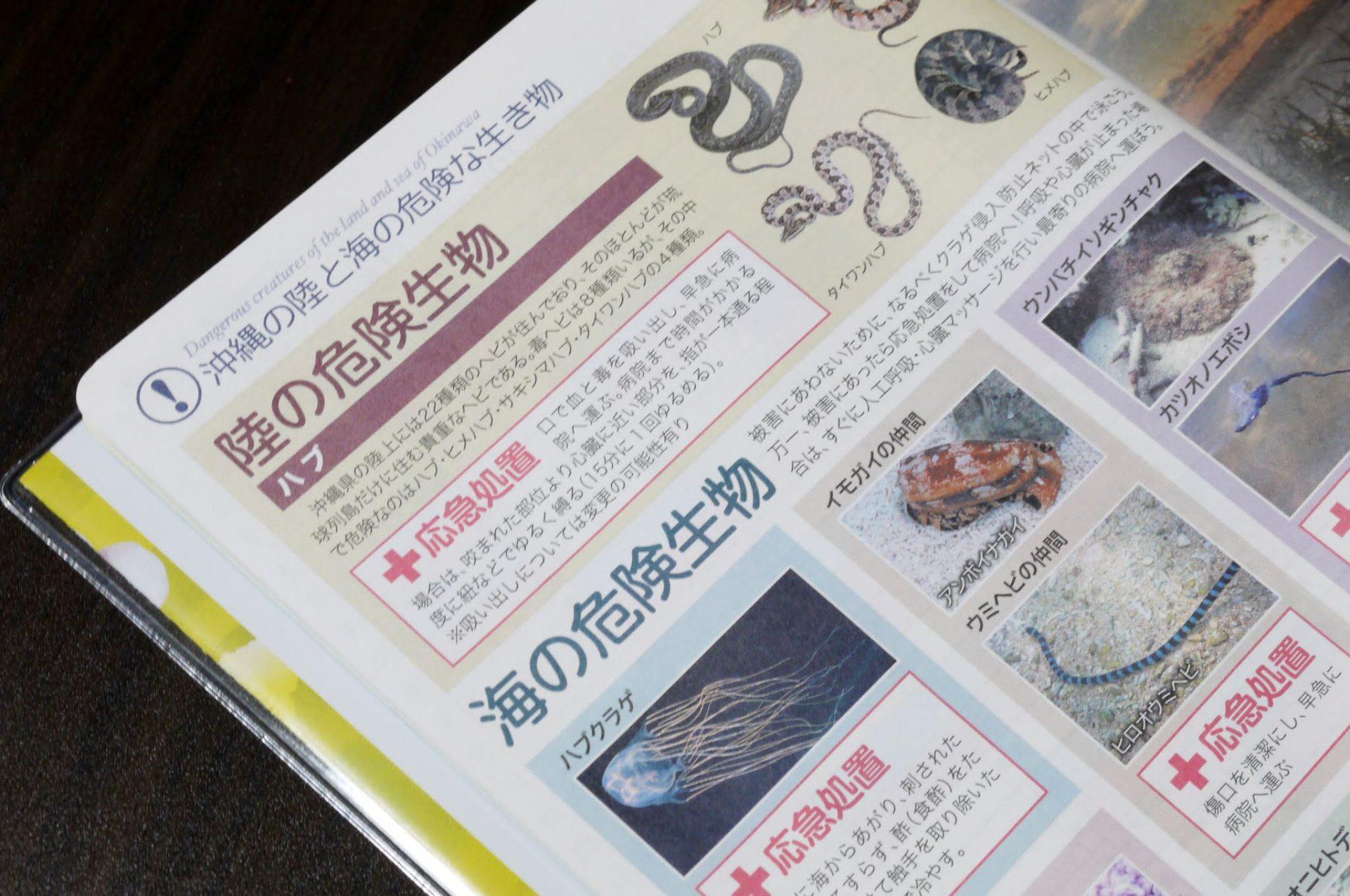 沖縄の危険生物情報