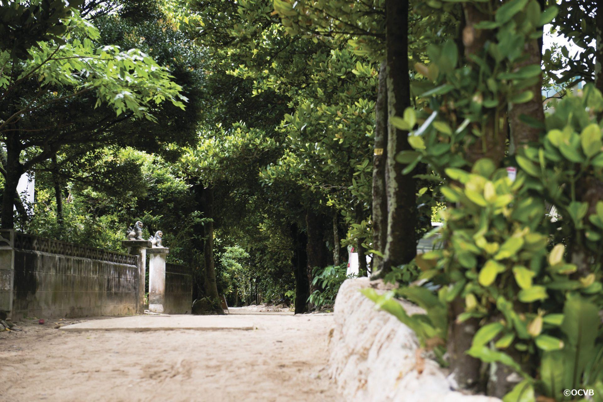 フクギ並木 本部町 沖縄 旅行 カップル