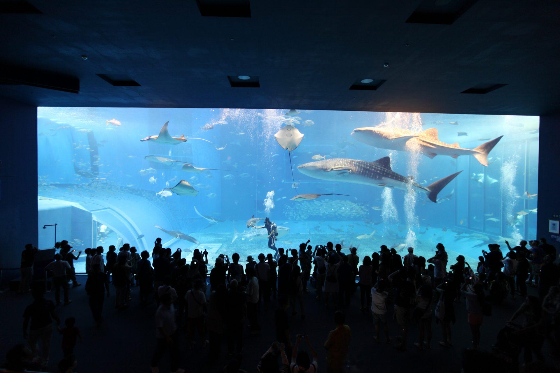雨の日の観光におすすめ!沖縄北部「沖縄美ら海水族館」