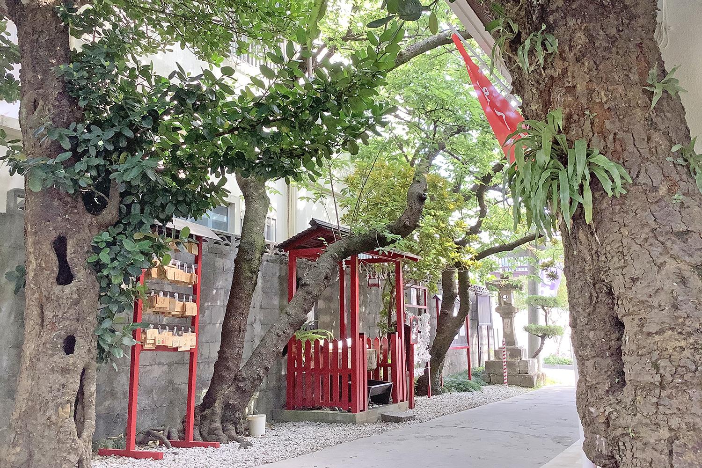 参道の福木