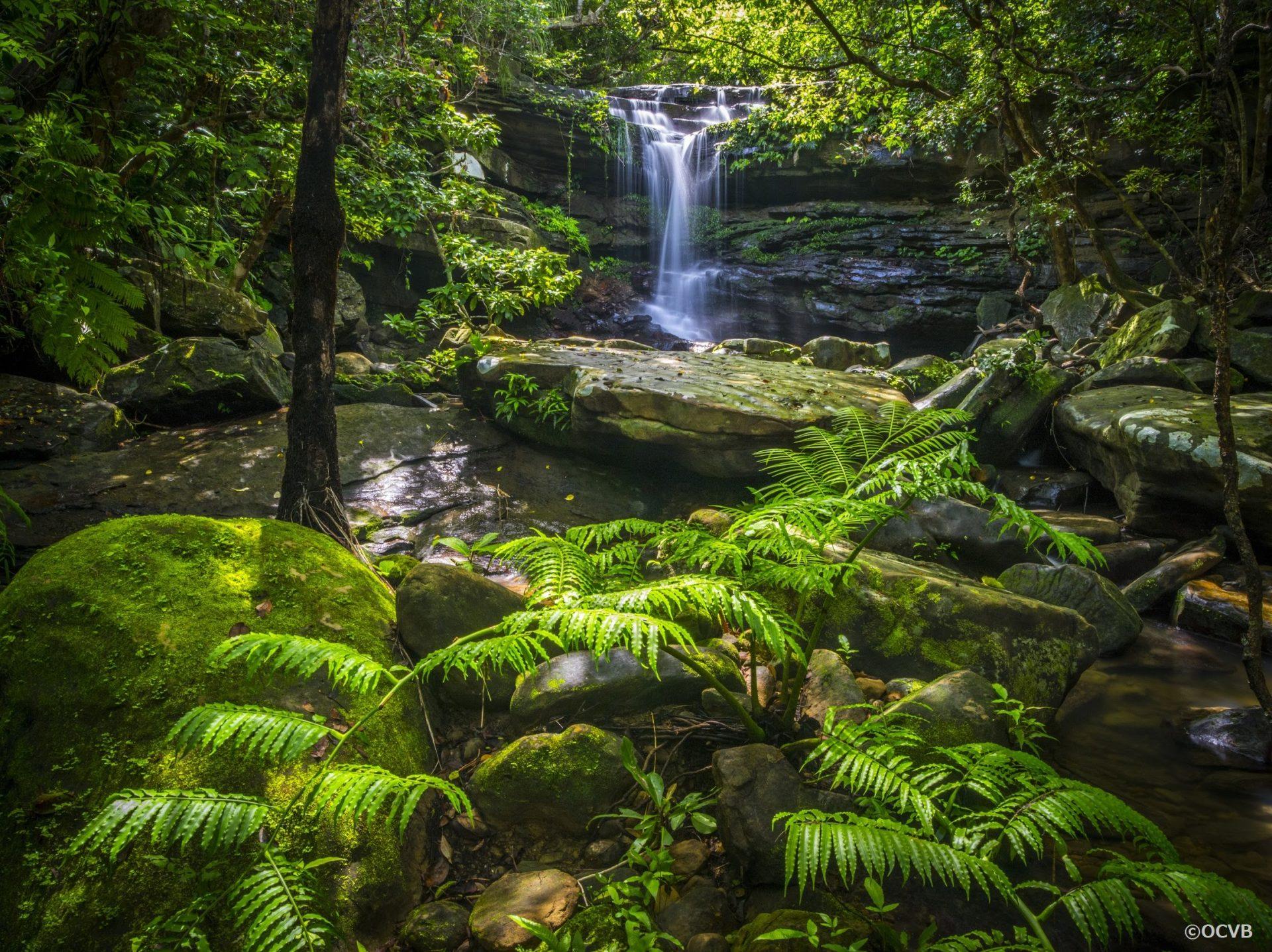 西表島 東洋のガラパゴス 大自然