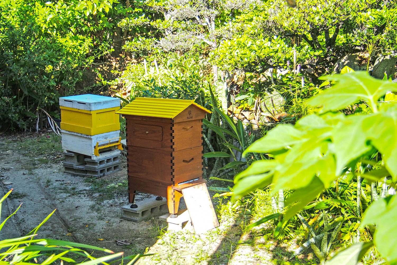 庭に蜂の巣箱