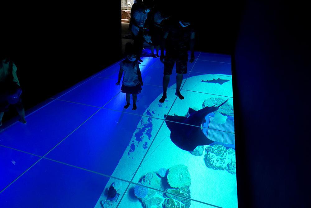 床一面が透明なガラス張りのエリア