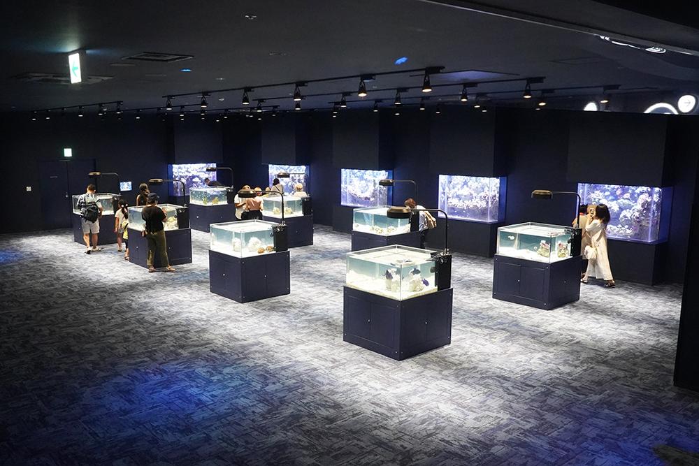 1階の「澄み切った海」でクラゲや熱帯業を鑑賞