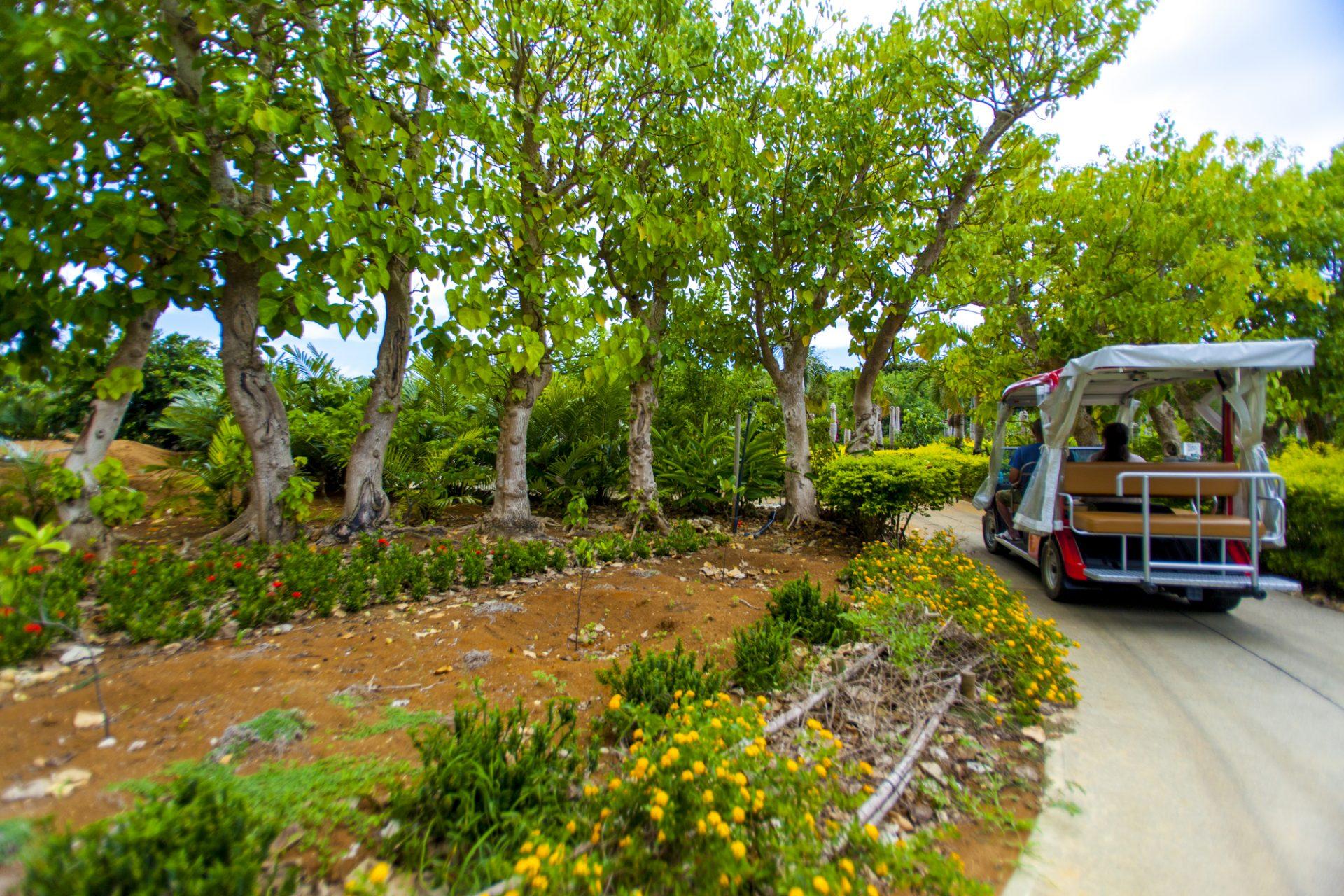宮古島熱帯果樹園 まいぱり 宮古島 観光 スポット おすすめ 沖縄 旅行