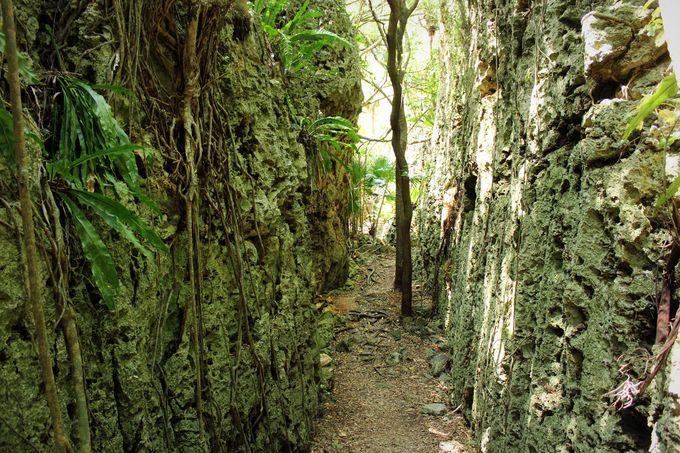バリバリ岩 おすすめ 南大東島 観光 旅行 沖縄 離島
