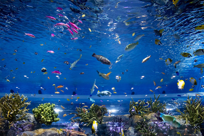 色とりどりの鮮やかな熱帯魚、サメとエイも泳ぐ大水槽