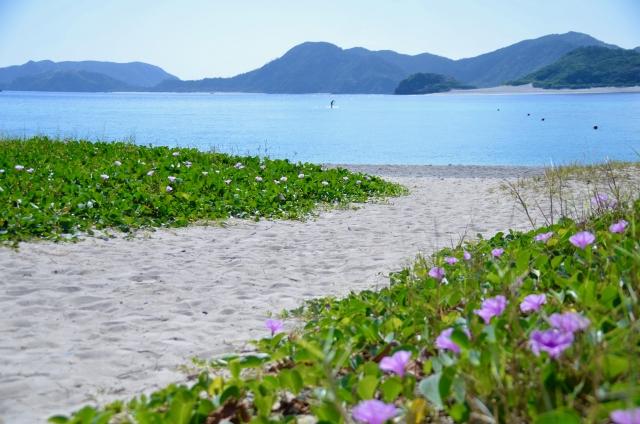 座間味島 観光 沖縄 離島 旅行 おすすめ