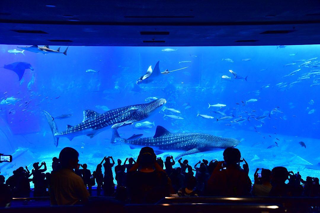 沖縄 美ら海水族館 本部町 北部 観光 おすすめ 旅行 スポット 地