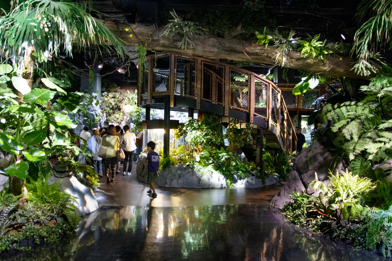 入口は2階!まずは「常緑の森」で生き物たちを見学