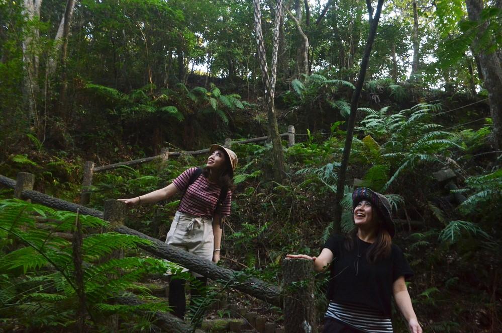 国頭村 森林公園 沖縄 北部 観光 おすすめ 旅行 スポット 地