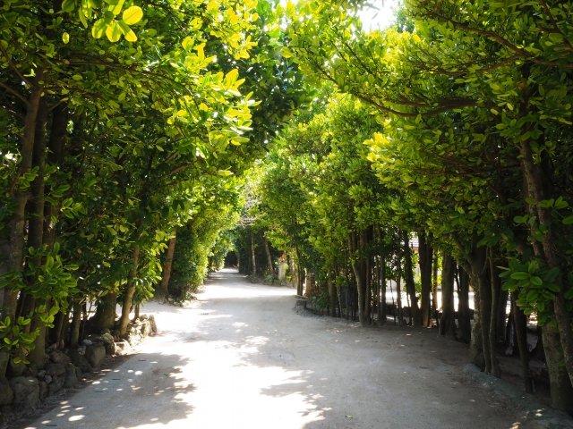 備瀬のフクギ並木 本部町 沖縄 北部 観光 おすすめ 旅行 スポット 地