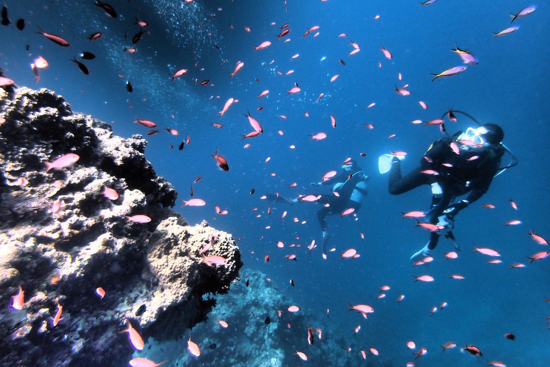 ダイビング 石垣島 マリンスポーツ 沖縄 アクティビティ