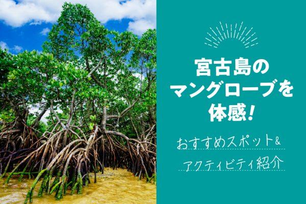 宮古島のマングローブを体感!おすすめスポット&アクティビティ紹介