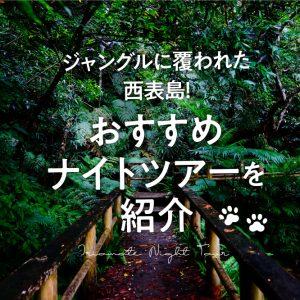 ジャングルに覆われた西表島!おすすめナイトツアーを紹介