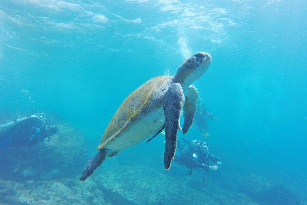 【遭遇率90%】高確率でウミガメに出会える!宮古島のおすすめアクティビティ